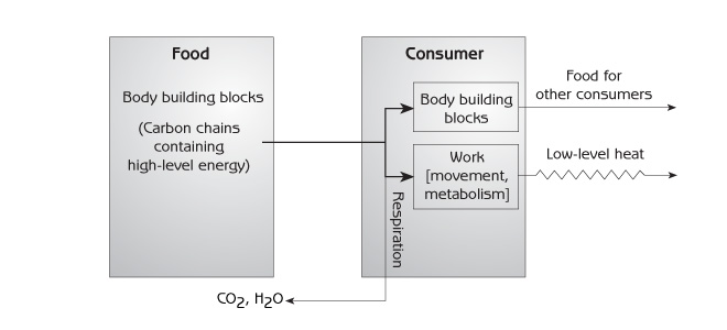 Figure 8.6 shows energy flow from one step of a food chain to another.